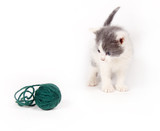 gray and white kitten looking at yarn poster