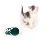 gray and white kitten looking up with yarn poster