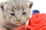 tired kitten and ball of yarn poster