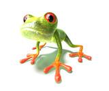 Fototapety grenouille