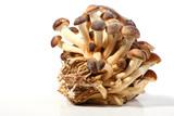 southern poplar mushroom poster