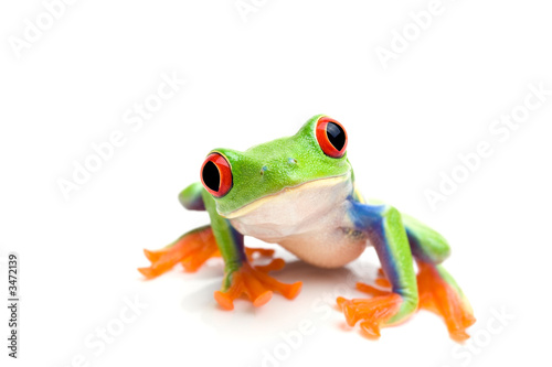 frog closeup on white - 3472139