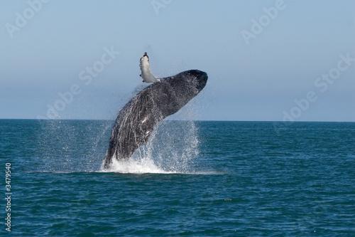 pokaz wielorybów