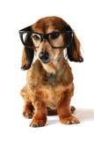 Smart dog. poster
