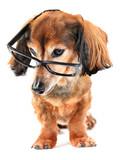 smart puppy poster