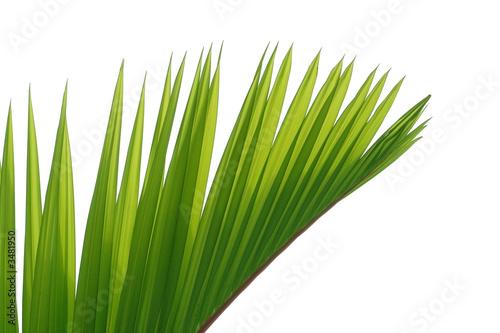 Feuille palmier vert tendre de frog 974 photo libre de for Espace vert 974