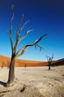 dead trees in namib desert