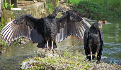 even vultures can love!