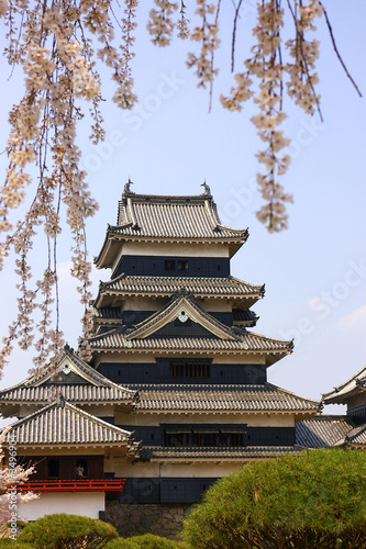 a traditional Japanese castle with cherry blossom in foreground