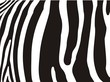 Zebra pattern - Detail of zebra stripes