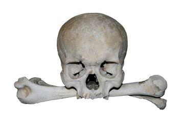 human skull with bones