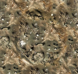 mold texture poster