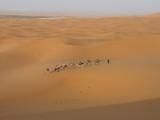 caravane dans le désert saharien poster