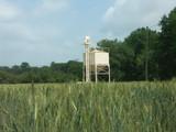 culture du blé poster