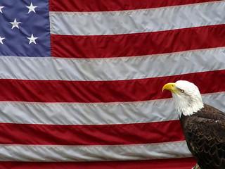 american eagle-rb