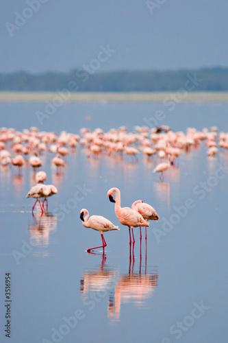 Foto op Aluminium Flamingo flamingos