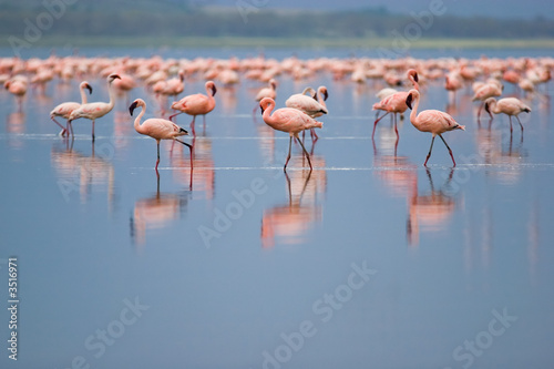 Foto op Canvas Flamingo flamingos
