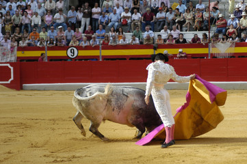 torero-68