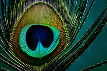 Auge einer Pfauenfeder