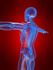 seitenansicht eines skeletts