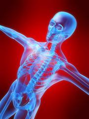 vorderansicht eines skeletts