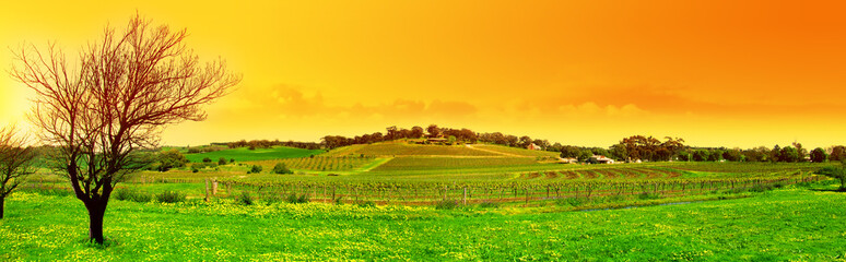 fresh vineyard panoramic