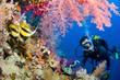 Fototapeten,südamerikanisch,afrika,riff,korallen