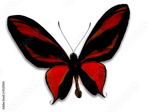 papillon rouge photo libre de droits sur la banque d 39 images image 3531954. Black Bedroom Furniture Sets. Home Design Ideas