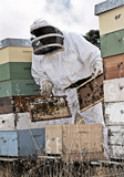 man in a beekeepers outfit checking a beehive. poster