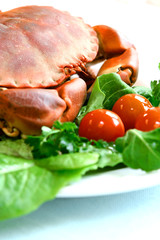 Fresh steamed crab on bed of fresh salad greens and tomatoes