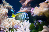 tropical fish - picture taken in Poznan zoo poster