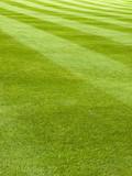 Fototapety Large lawn of a grass mowed in stripe pattern