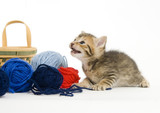 A small kitten plays with balls of yarn on a white background poster