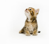 A kitten looks up and to the left on a white background poster
