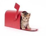 A small kitten hides inside of a red mailbox poster