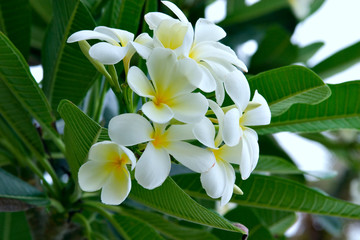 White flowers on tree