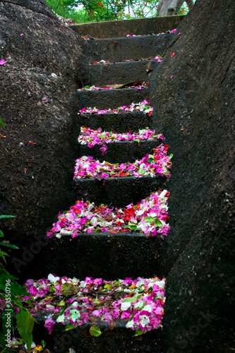 Stairs covered with flowers petals