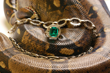 Brown snake with modern jewelrys 3