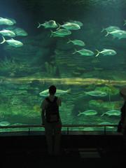 Valencia's Aquarium