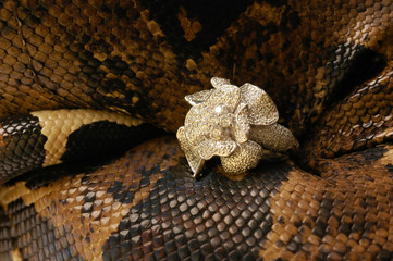 Brown snake with modern jewelrys 12