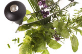 fresh herbs and mezzaluna. poster