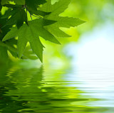 green leaves reflecting in the water, shallow focus - Fine Art prints