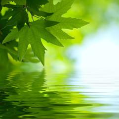 zielonych liści odbijających się w wodzie, płytkie fokus