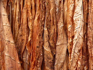 drying tobacco - texture