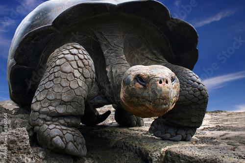 Deurstickers Schildpad Gorgeous turtle