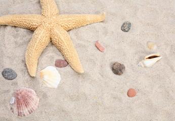 Seashell and starfish
