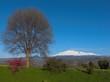 albero e Etna innevata