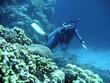 diver in deep. underwater photographer