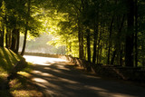 Warm sunlight streaming through the trees on a country road.  poster