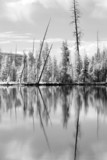 yellowstone national park in infrared converted to b&w poster